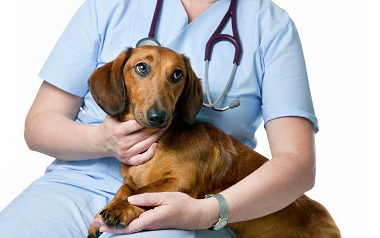 Забытое искусство физического осмотра в ветеринарной практике