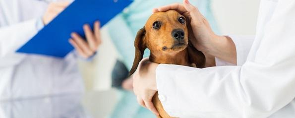 Лучшие ветеринарные практики в истории